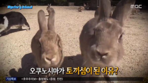 ▲오쿠노시마 토끼섬(사진=MBC '서프라이즈' 방송화면 캡처)