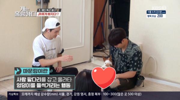 ▲잭러셀테리어 마운팅(사진=KBS2 '개는 훌륭하다' 방송화면 캡처)
