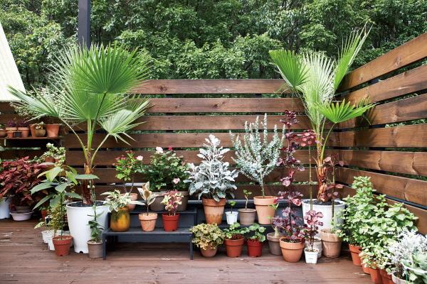 ▲테라스 한 켠에 이색 식물을 모아두었다. 양쪽에 대칭을 이루며 서있는 나무는 워싱턴야자로, 국내에선 제주도에서만 볼 수 있는 희귀종이다. 가격은 5만~7만 원대.(오병돈 프리랜서 obdlife@gmail.com)