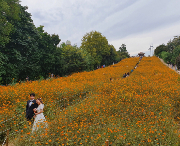 ▲10월 11일 올림픽공원의 풍경.( 촬영 이봉수 )