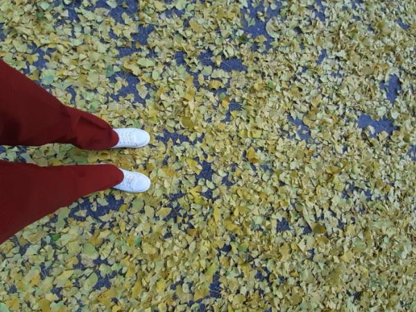 ▲은행잎으로 덮인 길을 걸으면 가을 소리가 절로 들린다.