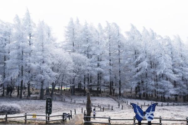 ▲만항재 하늘숲 공원(사진 서동환 시니어기자 )