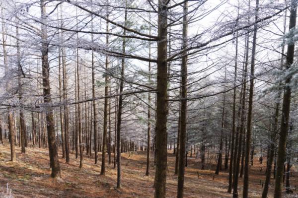 ▲하늘숲 정원 숲길(사진 서동환 시니어기자 )