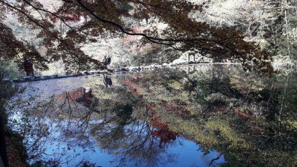 ▲물에 비친 백양사의 마지막 단풍(사진 정원일 시니어기자)