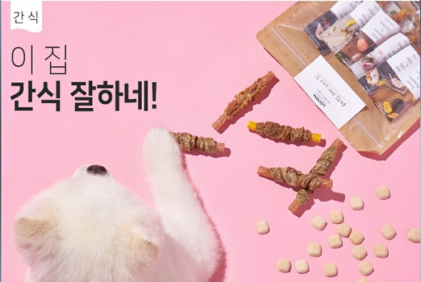 ▲'닥터독', 캐시워크 돈버는퀴즈 정답 공개
