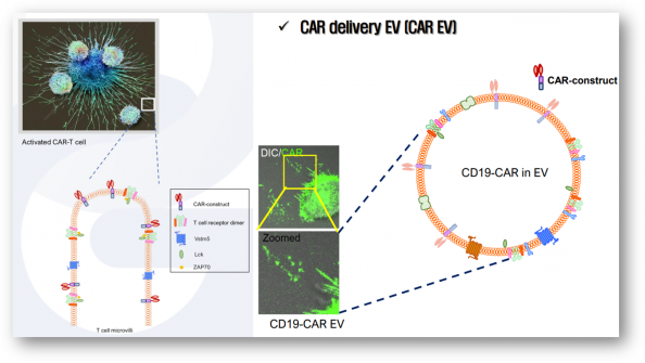 ▲마이크로빌라이 이용한 면역 딜리버리 플랫폼 (카이노젠 IR 자료)