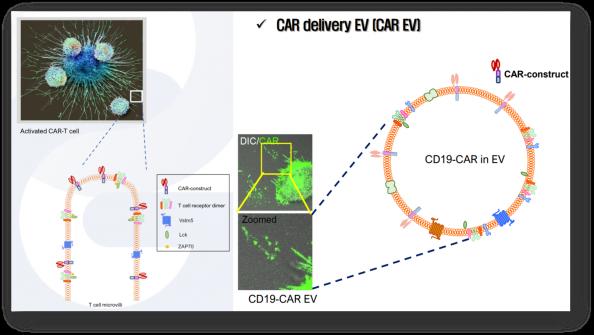 ▲Concept of microvilli immune delivery platform