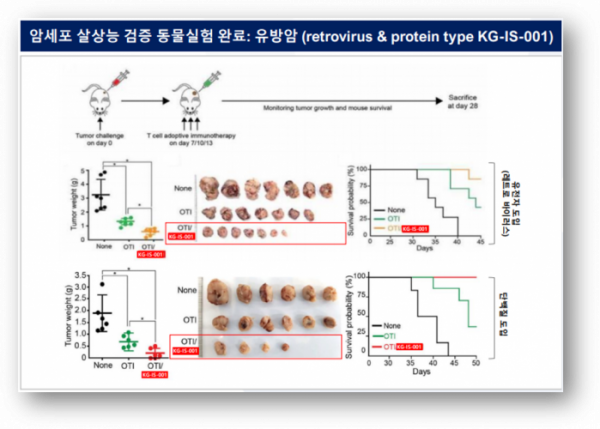 ▲Anti-tumor effects of KG-IS-001 type