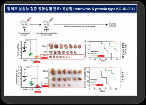 ▲T세포에서 KG-IS-001 도입 방법에 따른 항암 효과 확인 데이터 (카이노젠 IR 자료)