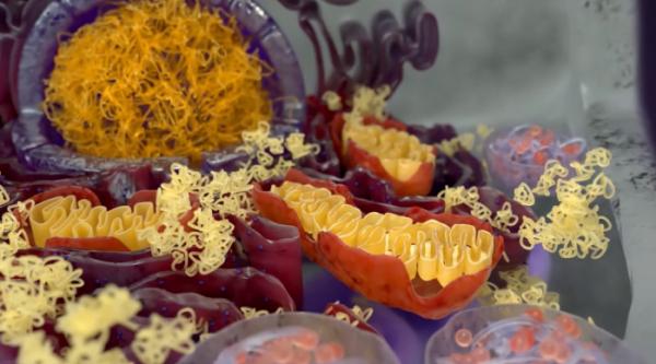 ▲루게릭병 기전 설명 영상(아밀릭스 홈페이지)