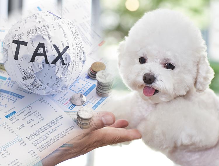 반려동물 보유세 검토