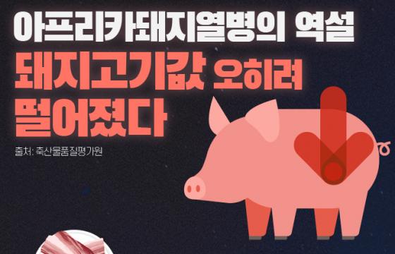 [인포그래픽] 아프리카돼지열병의 역설…돼지고기값 오히려 떨어졌다