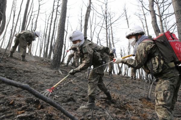 ▲육군 23사단 장병들이 6일 강릉시 옥계면 산불 지역에서 잔불 제거 작전을 펼치고 있다.(연합뉴스)