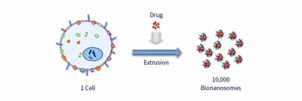 ▲엑소좀은 세포가 분비하는 양이 적어 사업화가 어려운 단점이 있다. 엠디뮨은 세포로부터 직접 압출방식에 의해 대량으로 베지클 (소포체·엑소좀 등 특수한 물질)을 제조하는 특허기술을 확보했다. (엠디뮨)