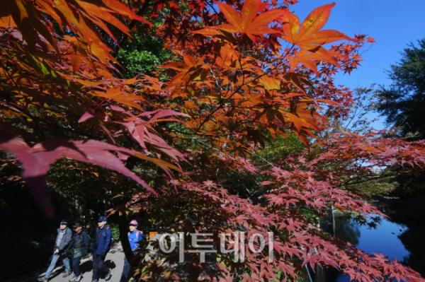 ▲13일 붉게 물들어가는 관악산의 단풍나무 아래로 시민들이 산행을 즐기고 있다.(신태현 기자 holjjak@)