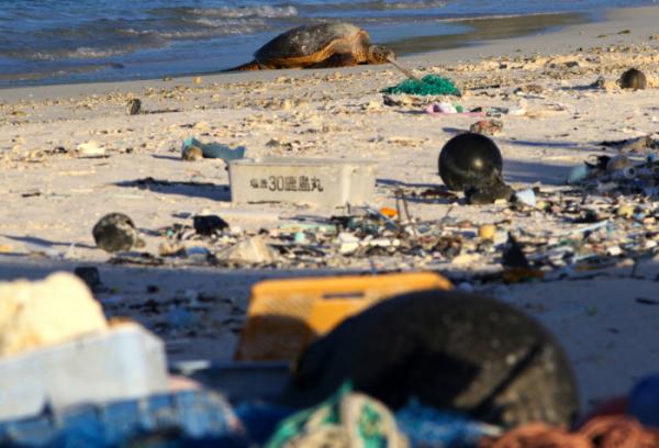 ▲플라스틱 쓰레기로 뒤덮인 해안가에서 바다거북이가 휴식을 취하고 있다.  (AP/뉴시스)