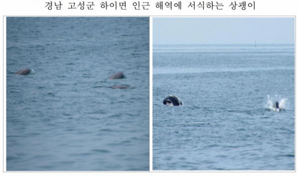 ▲경남 고성군 하이면 인근 해역에서 발견된 상괭이 무리. (사진제공=해양수산부)