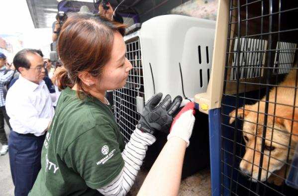 ▲지난해 7월 부산 북구 구포가축시장에서 동물보호단체 회원들이 도축 위기서 구출된 동물들을 보호소로 옮기기 위해 트럭에 싣고 있다.  (뉴시스)