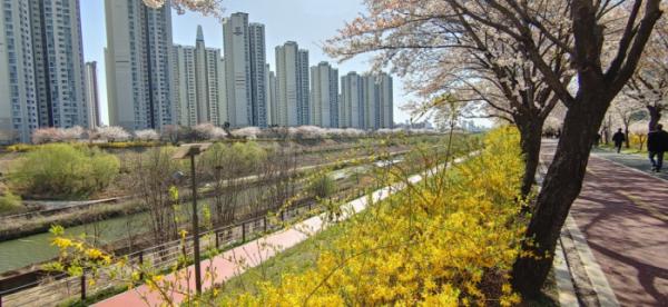 ▲서울 성내천에서 바라본 송파구 신천동 파크리오 아파트 단지 모습.