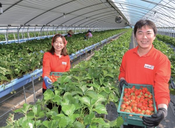 ▲박홍희(오른쪽) 우공의 딸기정원 대표가 자신의 스마트팜 시설에서 수확한 딸기를 들어보이고 있다.  (사진제공=우공의 딸기정원)