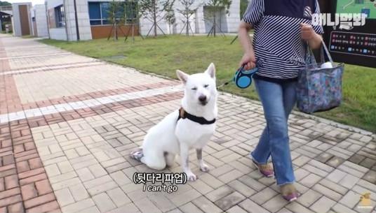 ▲동물농장 사과 (출처=유튜브 '애니뭘봐' 영상 캡처)