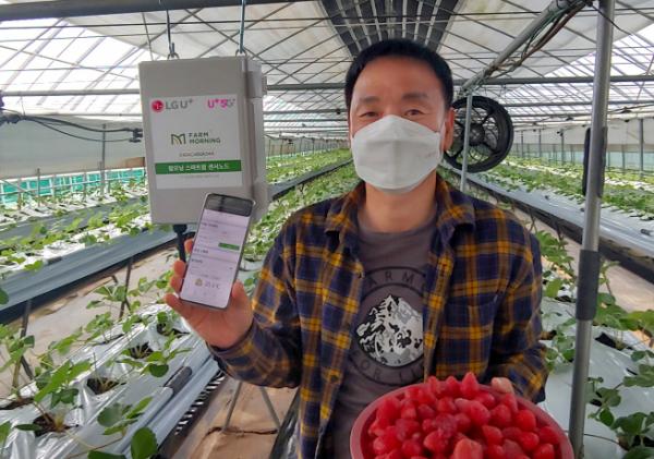 ▲스마트팜 서비스가 설치된 속초시 한 딸기 농가에서 농장주가 스마트폰의 원격관제 화면을 보여주는 모습. (LG유플러스 제공)
