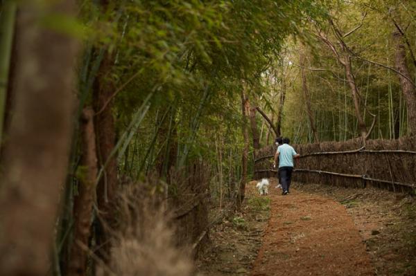 ▲송정 해수욕장으로 이어지는 대나무길.