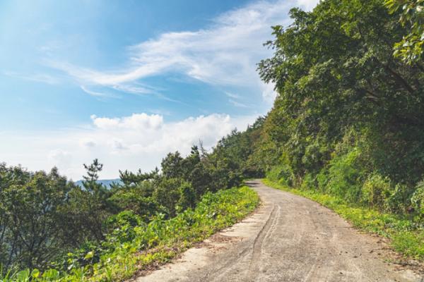▲호랑산 중턱을 넘는 임도는 자전거 라이딩 코스로도 유명하다.