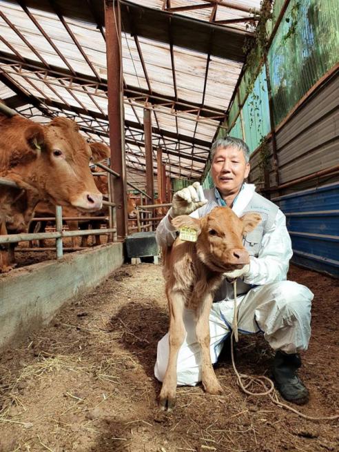 ▲국내 첫 송아지용 바이오캡슐 도입 예정인 가평 흙목장 강인구 농장주