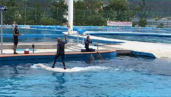 ▲국내 한 수족관에서 벨루가(흰고래)를 밟고 올라탄 조련사. (사진제공=핫핑크돌핀스)