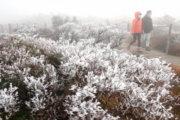 ▲상고대는 밤 기온이 0도 이하일 때 대기 중에 있는 수증기가 나무 잎이나 가지에 달라붙어 얼면서 나타나는 '나무서리'다.  (연합뉴스)