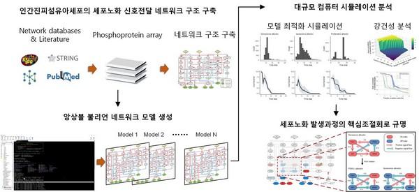 ▲앙상블 불리언 네트워크 모델링 및 대규모 컴퓨터 시뮬레이션 분석. (사진제공=한국과학기술원)