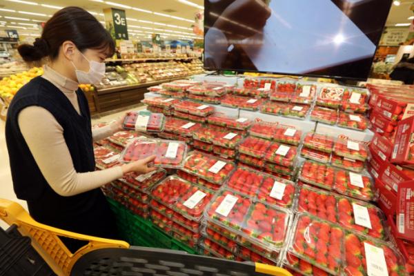 ▲이마트는 지난해 12월부터 올해 1월까지 겨울 매출을 분석한 결과 딸기 매출이 300억 원을 넘어서며 라면에 이어 매출 2위를 차지했다고 17일 밝혔다. (사진제공=이마트)
