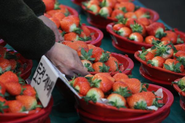 ▲딸기의 인기는 우수하고 다양한 품종 개발을 주요한 요인으로 꼽을 수 있다. (뉴시스)