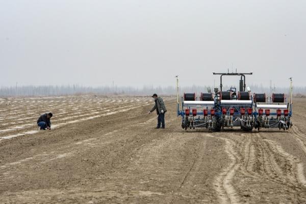 ▲지난달 30일 중국 신장 위구르 자치구의 한 논밭에서 농민이 목화 파종 거리를 측정하고 있다. 신장 위구르/신화뉴시스
