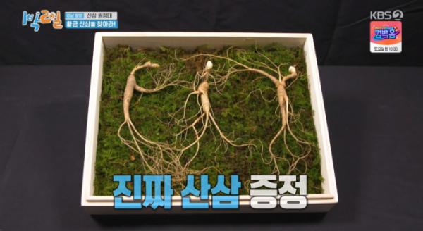 ▲1박 2일 함양 산삼(사진=KBS2 '1박 2일 시즌4' 방송화면 캡처)
