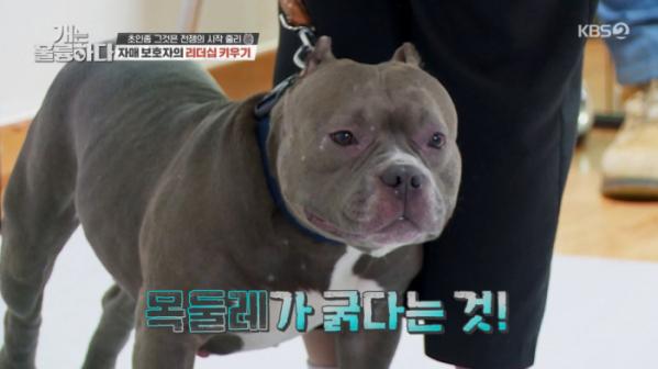 ▲'개는 훌륭하다'(사진제공=KBS2)