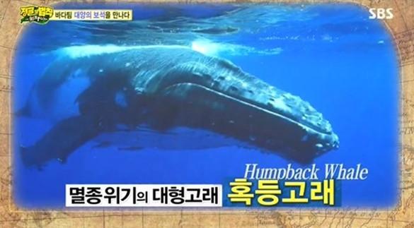 ▲혹동고래 (출처=SBS '정글의 법칙' 캡처)