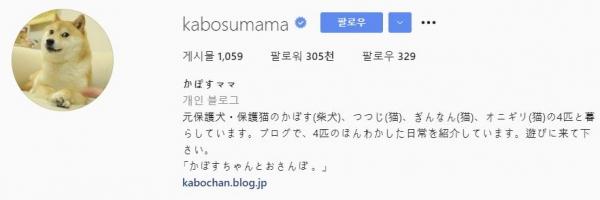 ▲400만 달러에 팔린 도지밈의 진짜 주인공 가보수맘 인스타그램 캡처.
