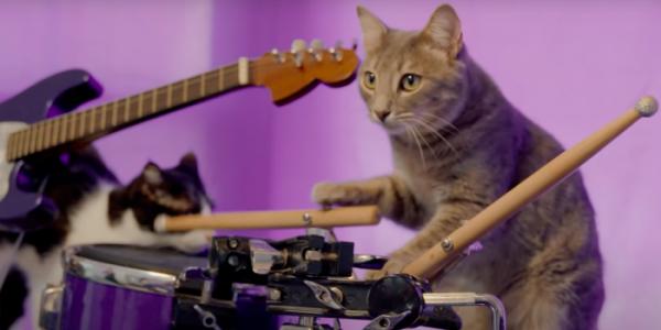 ▲서맨사의 고양이 쇼에 서는 고양이들은 악기 연주는 물론 공 굴리기, 볼링 등 다양한 재주를 선보인다. (넷플릭스)