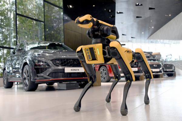 ▲보스턴 다이내믹스의 4족보행 로봇 스팟이 현대모터스튜디오 고양 내부를 오가고 있다.  (사진제공=현대차)