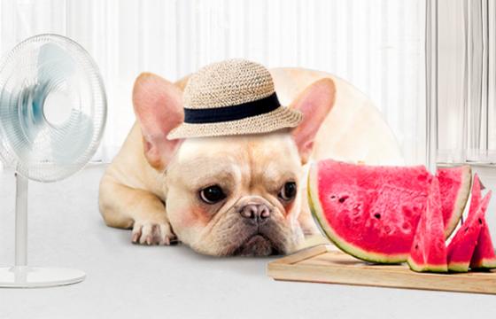 [헬스로그] 더운 여름, 강아지는 괜찮을까?…진드기·열사병·보양식 챙기기
