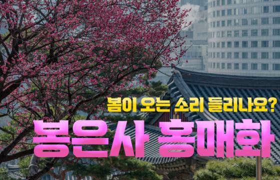 [발로 뛰는 뉴스] 봄이 오는 소리 들리나요? 봉은사 홍매화 풍경